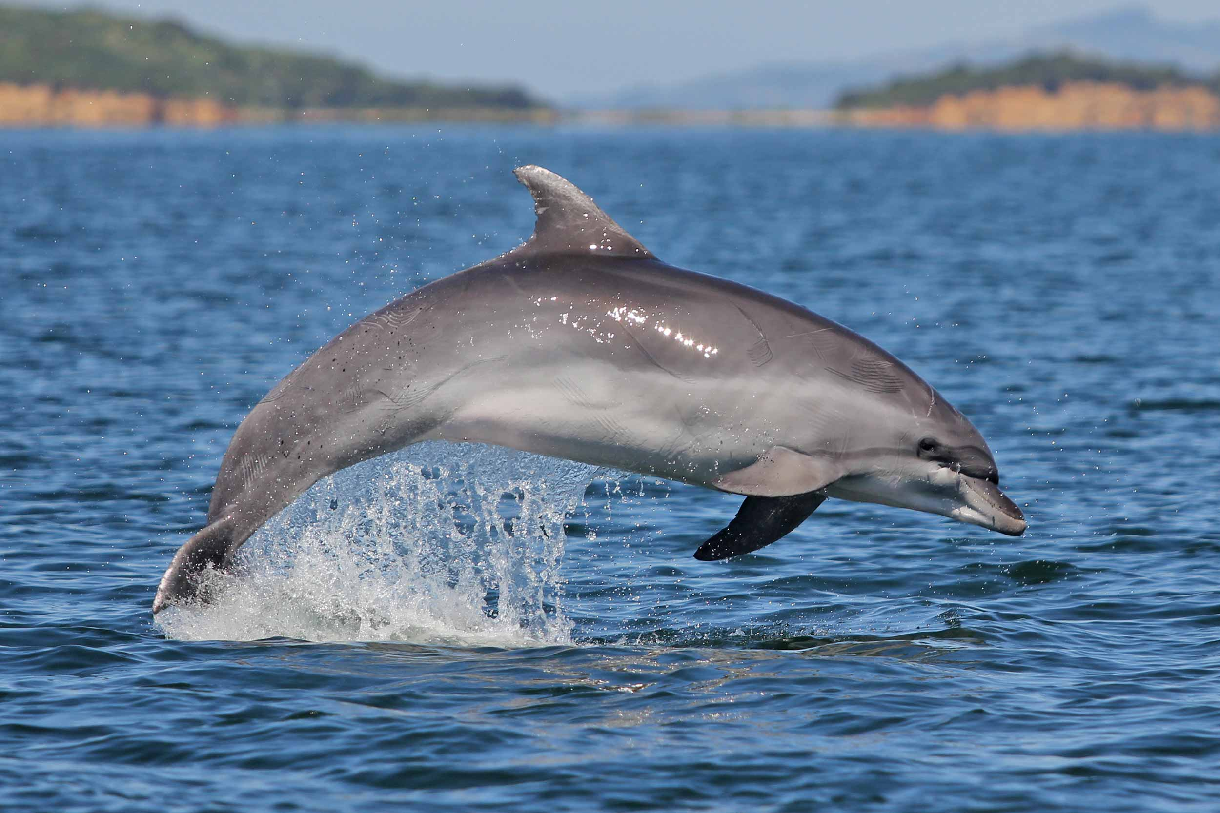 meet the tethys team greece ionian dolphin project