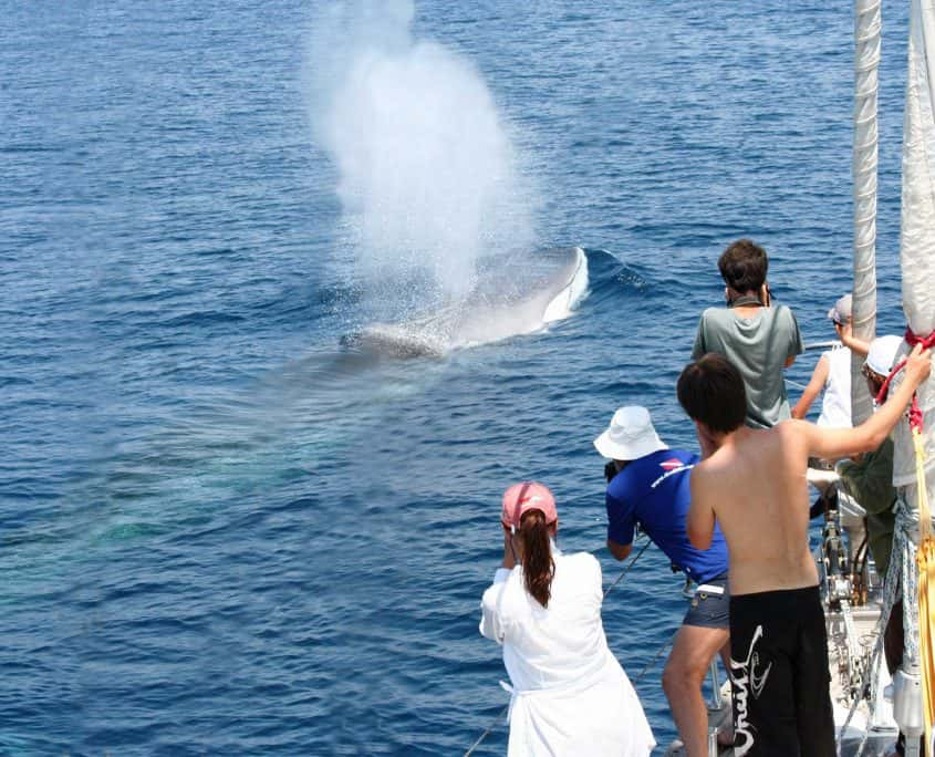 people on boat with fin whale