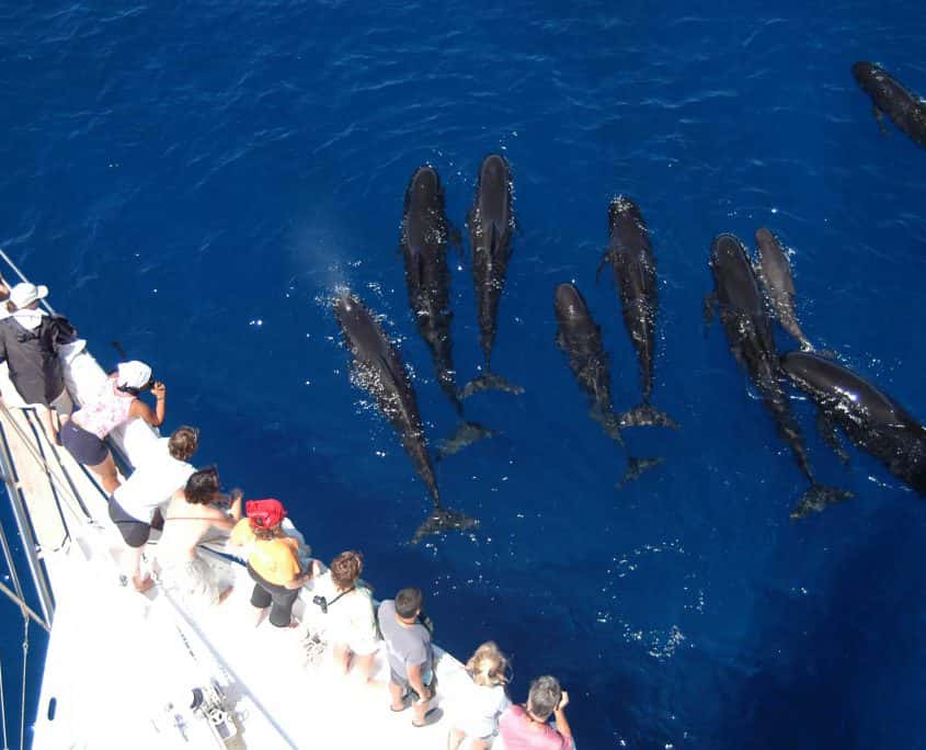 people on boat watching pilot whales