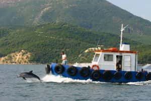 fishing boat with bowriding dolphin