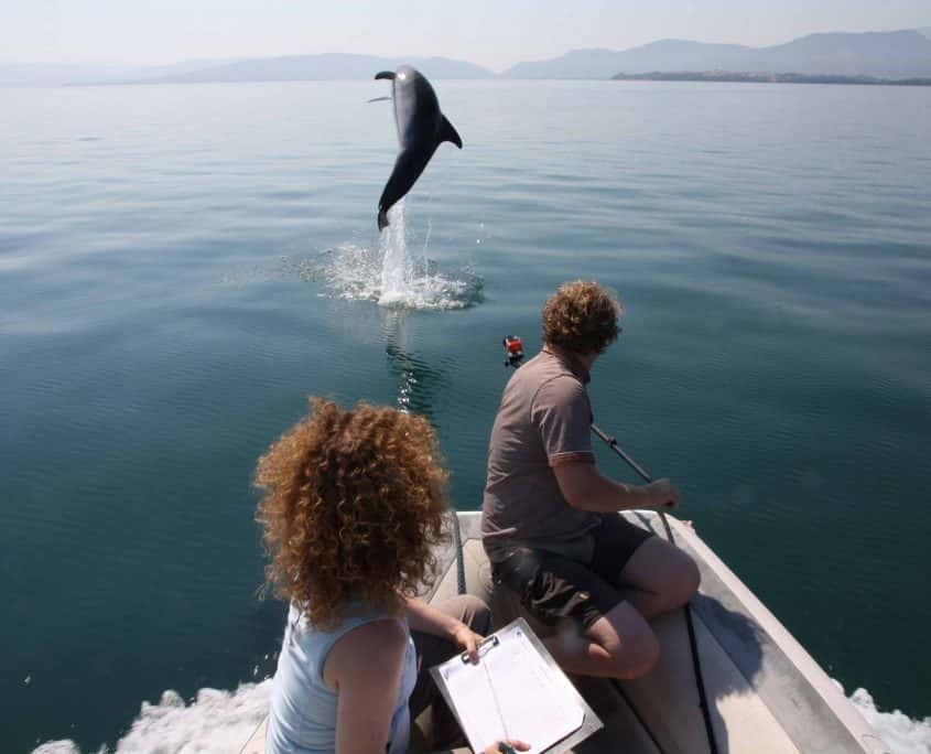 researchers with dolphin