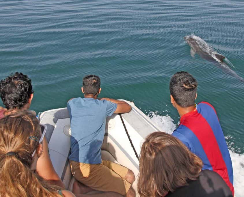 People watching dolphin