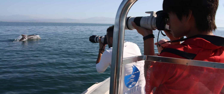 fotografo con delfini