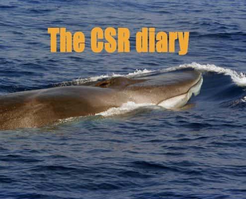 Fin whale CSR Diary