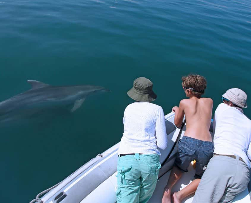 bottlenose dolphin and whalewatchers