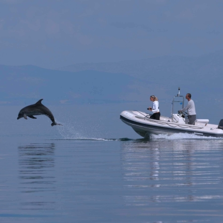 boat with dolphin leaping