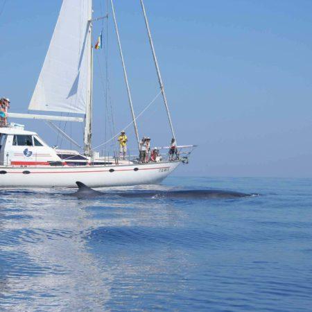 barca e balenottera comune