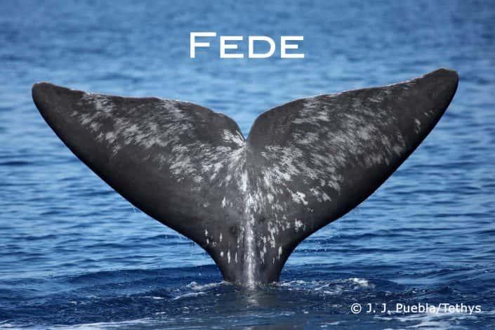 sperm whale Fede befriend a whale