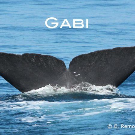 sperm whale Gaby befriend a whale