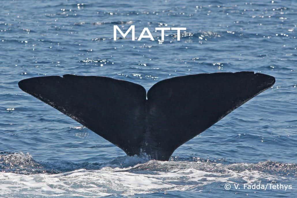 sperm whale Matt befriend a whale