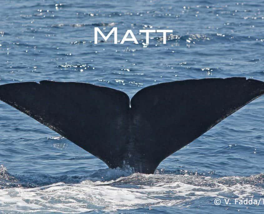 sperm whale Matt befriend a whale