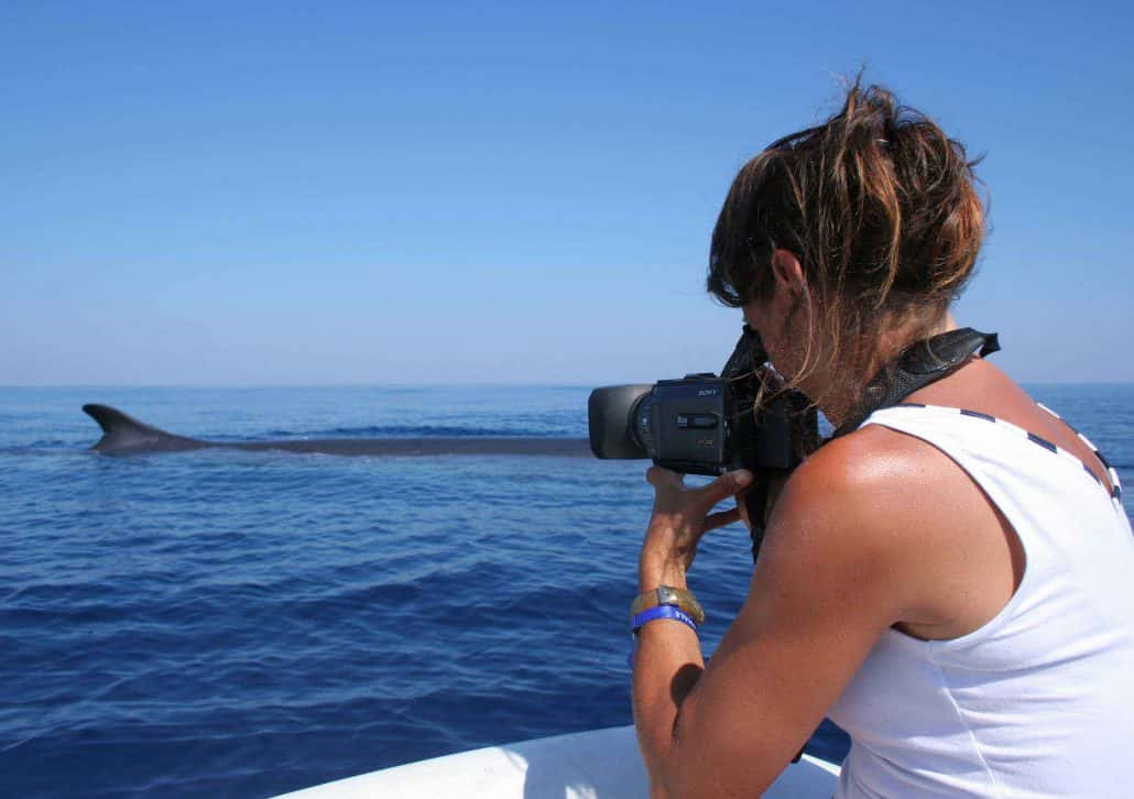 fin whale and photographer