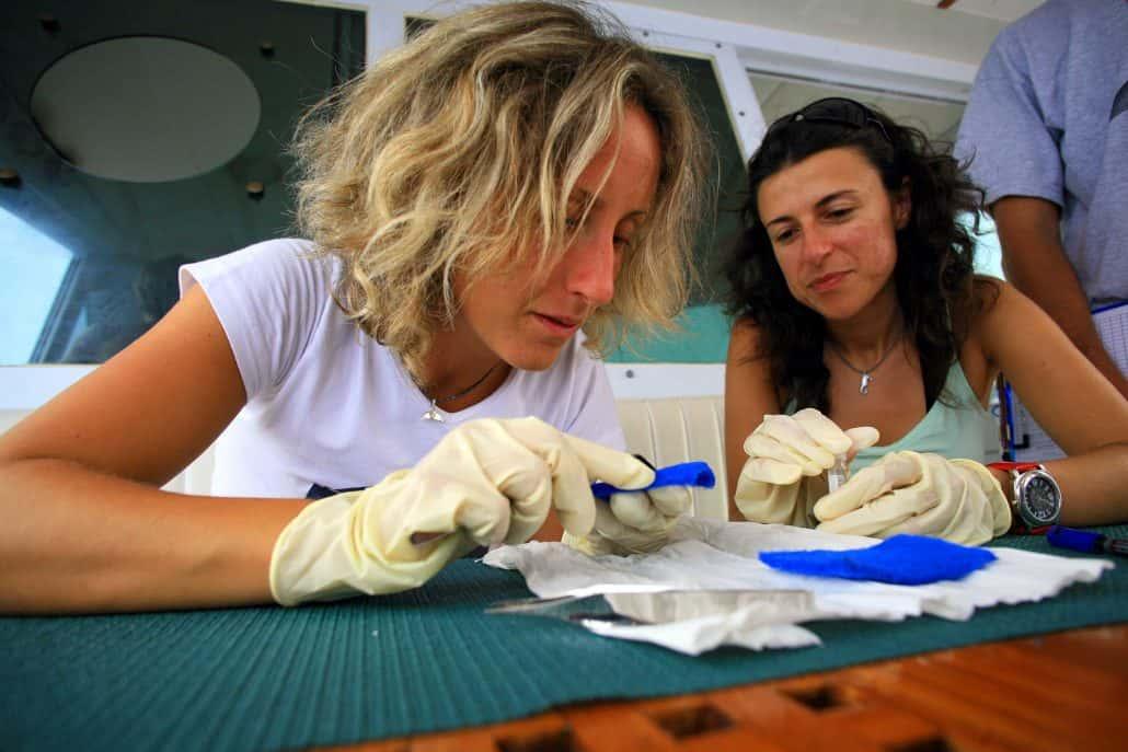 researchers of CSR