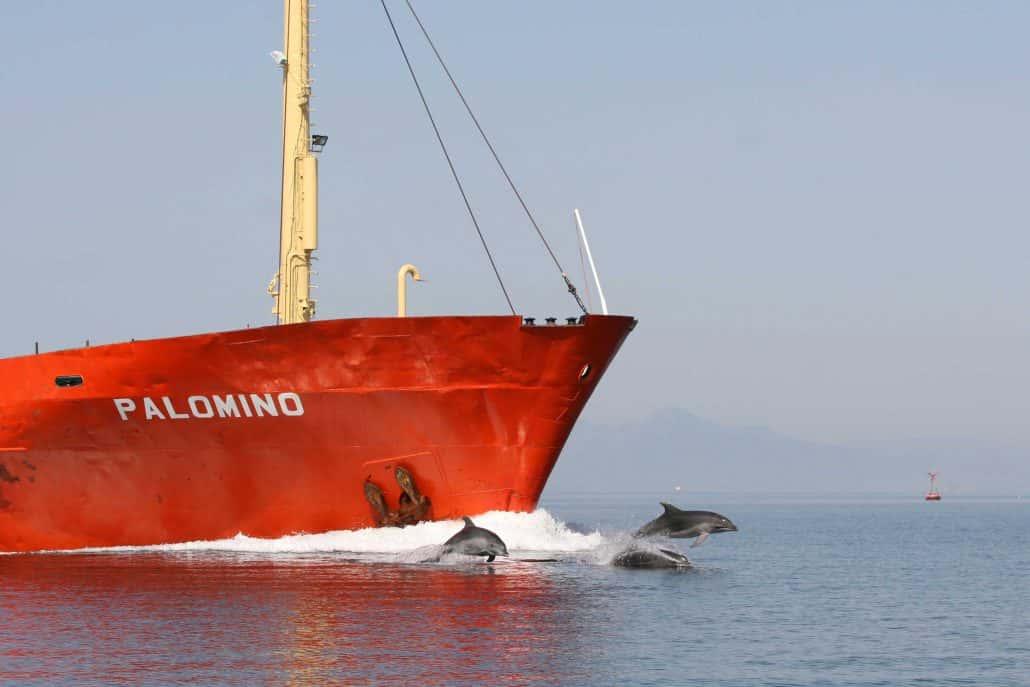 bottlenose dolphins bowriding cargo