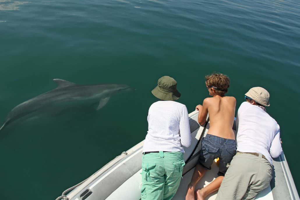 bottlenose dolphin and people watching